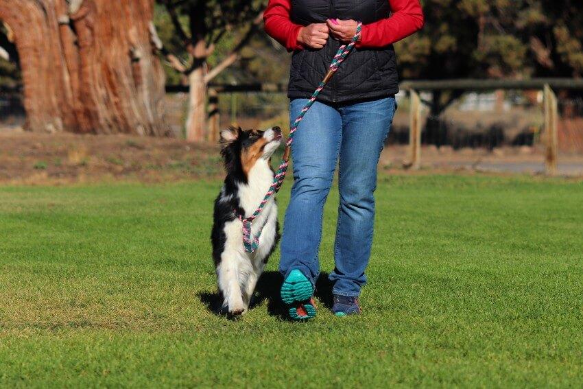 Dog training to heel properly